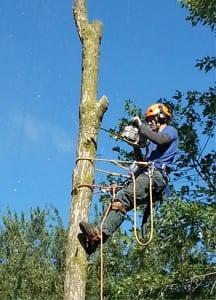 Tree Removal, Etobicoke, ON