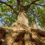 Deep Root Fertilization
