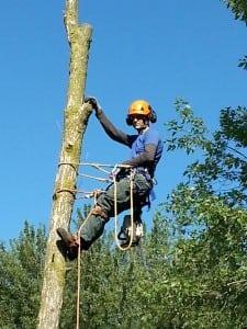 hudson-tree-owner