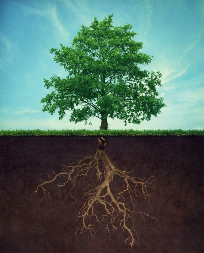Tree Health Tip: Deep Root Fertilization