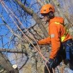 Arborist Report in Oakville, Ontario