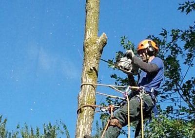 Hire an Arborist in Oakville, Ontario