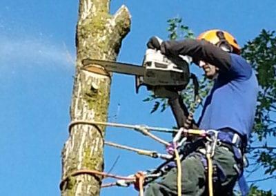 Man cutting tree branch