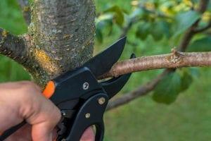 Tree PruningA Beginner's Guide to Tree Pruning